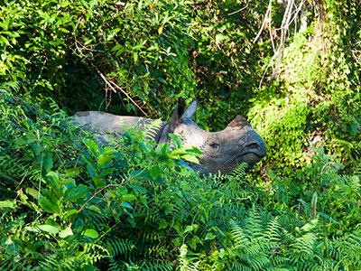 voyager au nepal chitwan photographier l'himalaya et les animaux du parc les rhinoceros www.thisytravels.fr