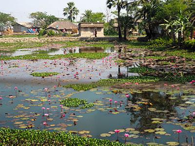 voyagez en orissa ou odisha visiter les campagne de l'est de l'inde avec ses lotus en fleur avec l'agence de voyage thisy-travels www.thisytravels.fr