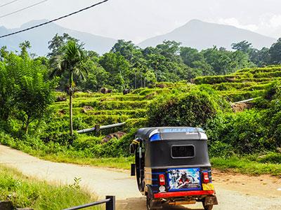 voyagez au sri-lanka avec l'agence de voyage thisy-travels visiter les cultures de thé avec un tuctuc www.thisytravels.fr