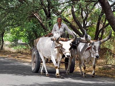 voyagez dans le gujarat a l'ouest de l'inde avec l'agence de voyage thisy-travels dans les campagnes avec les paysans www.thisytravels.fr