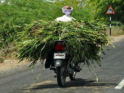 voyagez dans le gujarat a l'ouest de l'inde avec l'agence de voyage thisy-travels www.thisytravels.fr