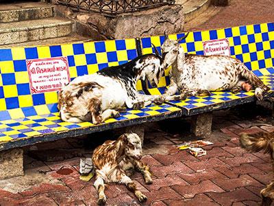 voyagez dans le gujarat a l'ouest de l'inde faire de la street photographie avec l'agence de voyage thisy-travels www.thisytravels.fr