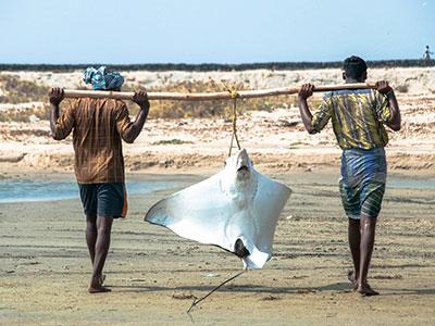 voyagez en inde du sud à rameshwaram dans le kerala avec l'agence de voyage thisy-travels www.thisytravels.fr
