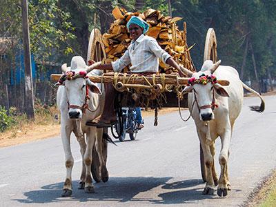 voyagez en orissa ou odisha visiter les campagnes avec l'agence de voyage thisy-travels www.thisytravels.fr