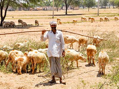 voyager dans les campagnes du rajasthan en inde avec l'agence de voyage thisy-travels www.thisytravels.fr