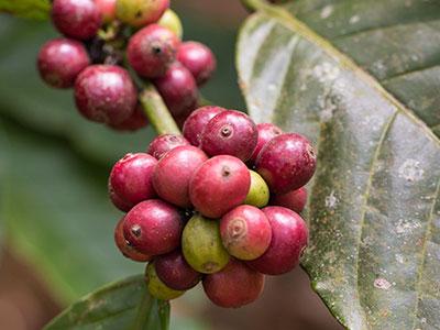 voyage en inde du sud à thekkady au kerala avec les épices, le poivre, en circuit avec thisy-travels www.thisytravels.fr