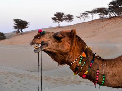 voyage et safari dans le desert du rajasthan a jaisalmer en inde du nord avec l'agence de voyage thisy-travels www.thisytravels.fr