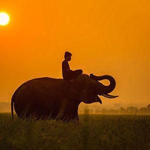 balade à dos d'éléphant avec le trip'kado, le produit de l'agence de voyage thisy-travels sur www.thisytravels.fr