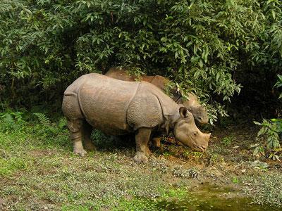 Voyage photo au Népal pour photographier les annapurnas, les rhinoceros au parc de Chitwan participer à la fête de Holi avec l'agence de voyage Thisy-Travels www.thisytravels.fr